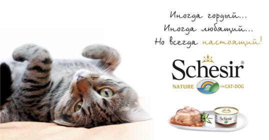 schesir_banner_cat_1076%d1%85560
